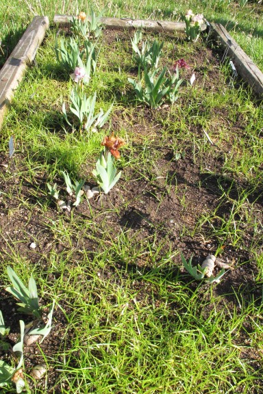 Full Garden In Backyard: Careful Selection Of Soil Amendments Will Avoid
